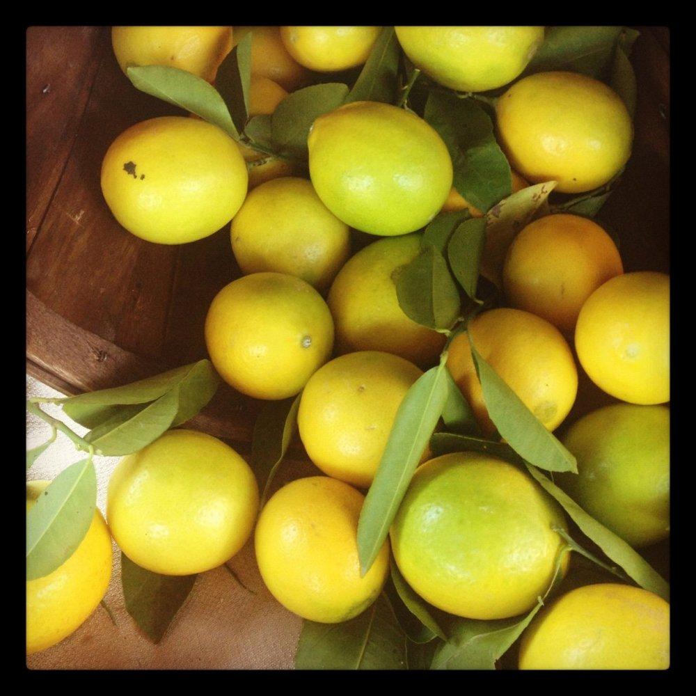 Harvest1lemons-1024x1024.jpg