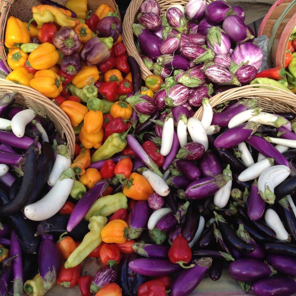 HarvestEggplants-1024x1024.jpg