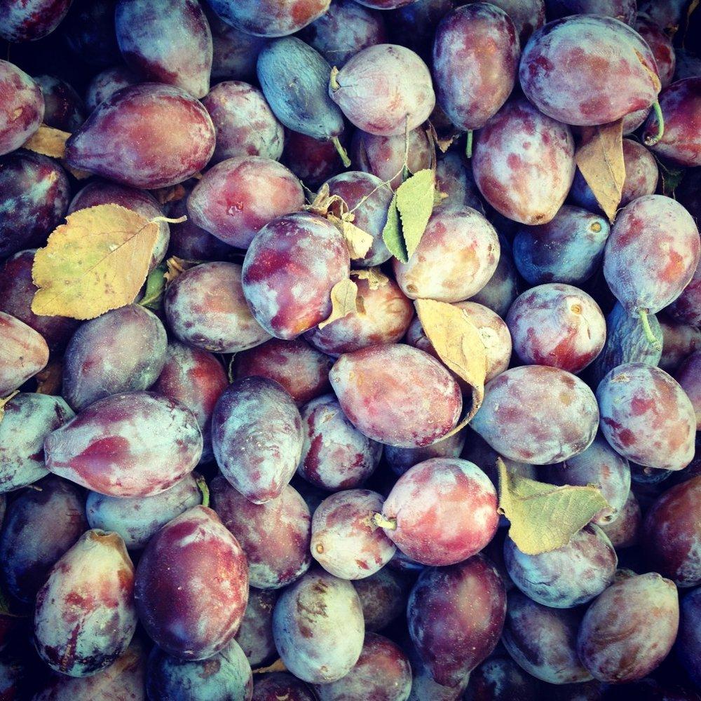 HarvestPrunes-1024x1024.jpg