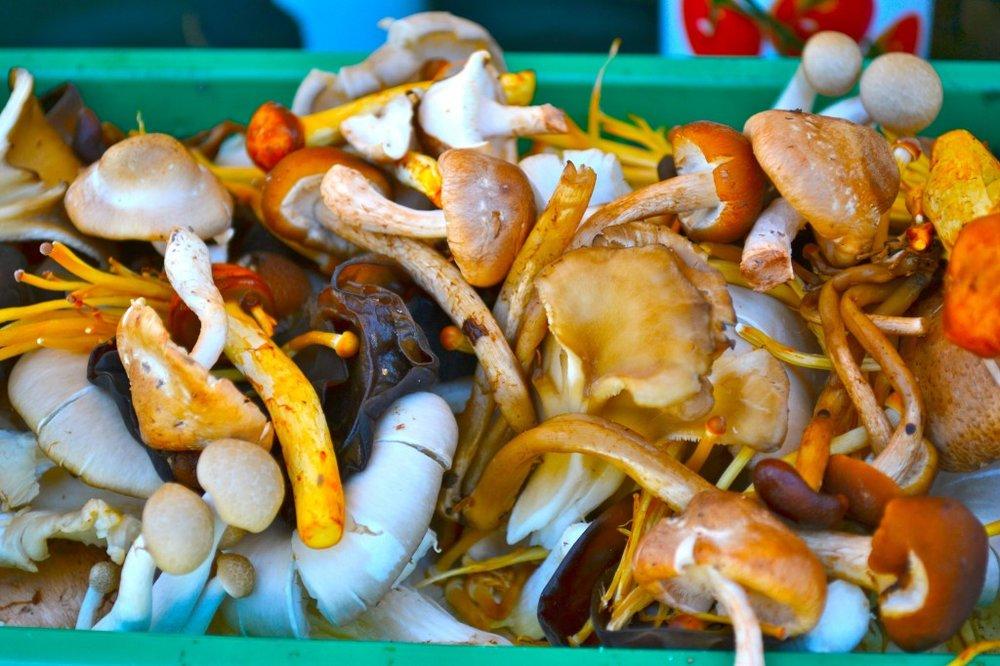 HarvestWildMushrooms-1024x682.jpg
