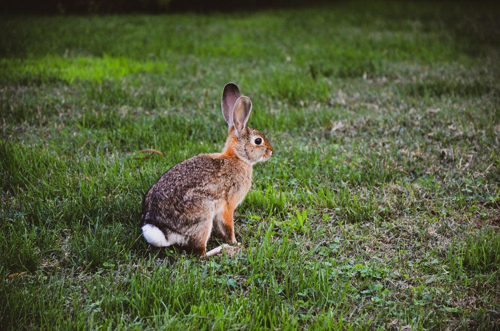 Bunny-Ojai-3.jpg