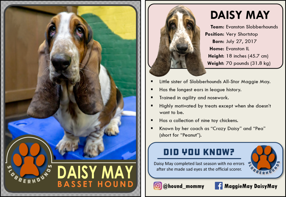 Slobberhounds All-Star Daisy May
