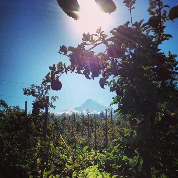 Hillsboro_Farmers_Market_Kiyokawa_Orchard.jpg