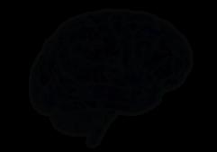 no-brain.png