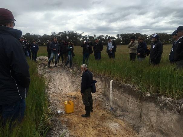 soil+pit.jpg