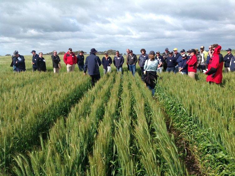 long+season+wheat+trial.jpg