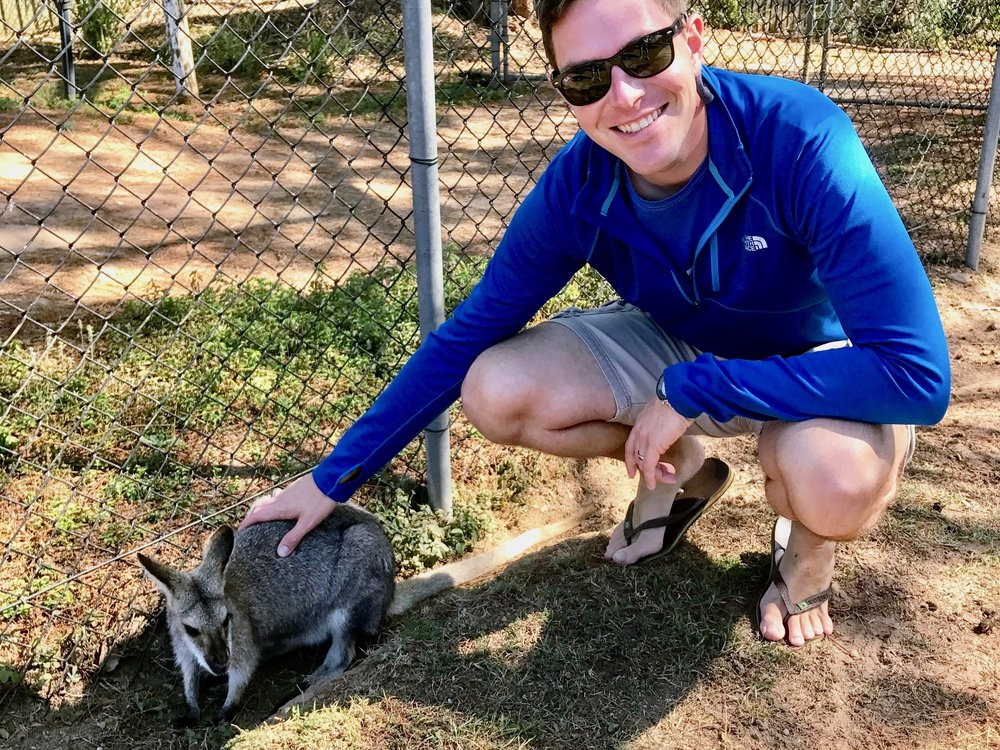 All of the kangaroos are tame, and most allow you to walk right up to them.