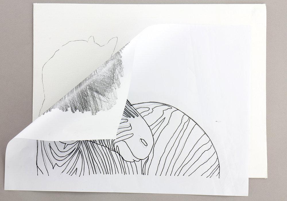 zebra-02.jpg