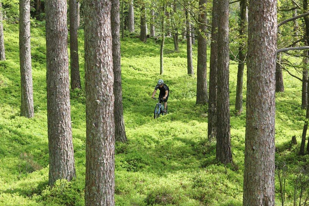 Mountainbike - Hyr en mountainbike och utforska Båstad och Bjärehalvön på egen hand eller välj att boka en tur på vackra Hallandsåsen med en erfaren guide och upplev de djupa skogarna och ta dig an åsens tekniska utmaningar.