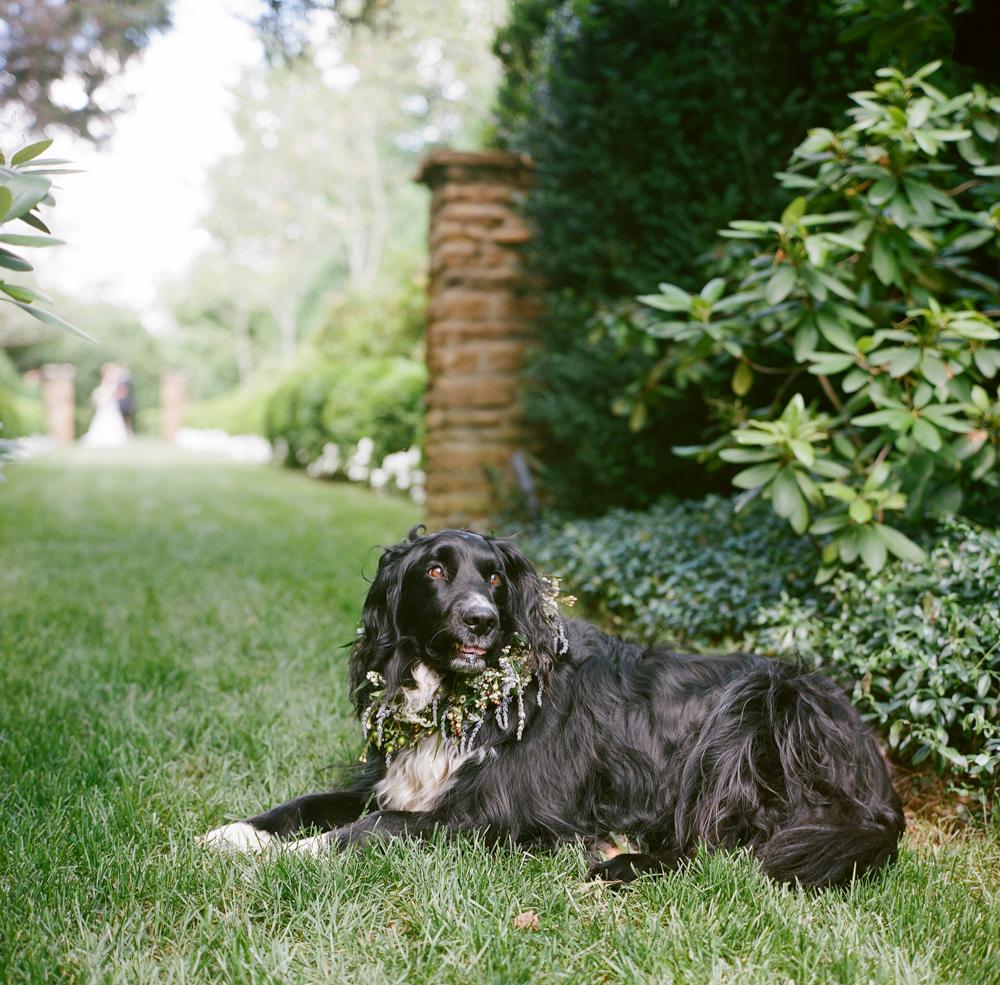 Radiant Southern Charm, Events by Reagan, Virginia Wedding, Destination Wedding Planner, Dog Flower Collar