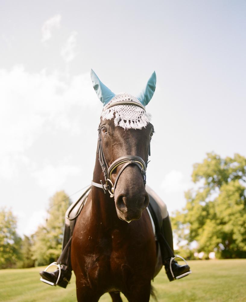 Radiant Southern Charm, Events by Reagan, Virginia Wedding, Destination Wedding Planner,  Farm Wedding, Horses