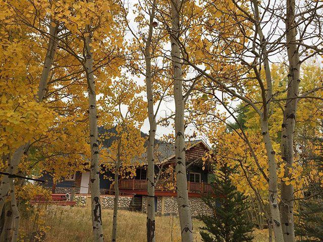 Beautiful fall colors in Cozy Bear Lodge. #wowyellowstonephotocontest