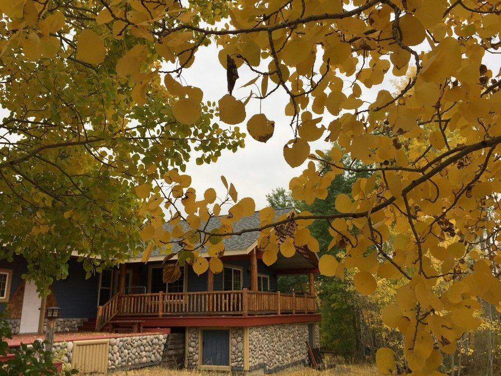 Cozy Bear Lodge -