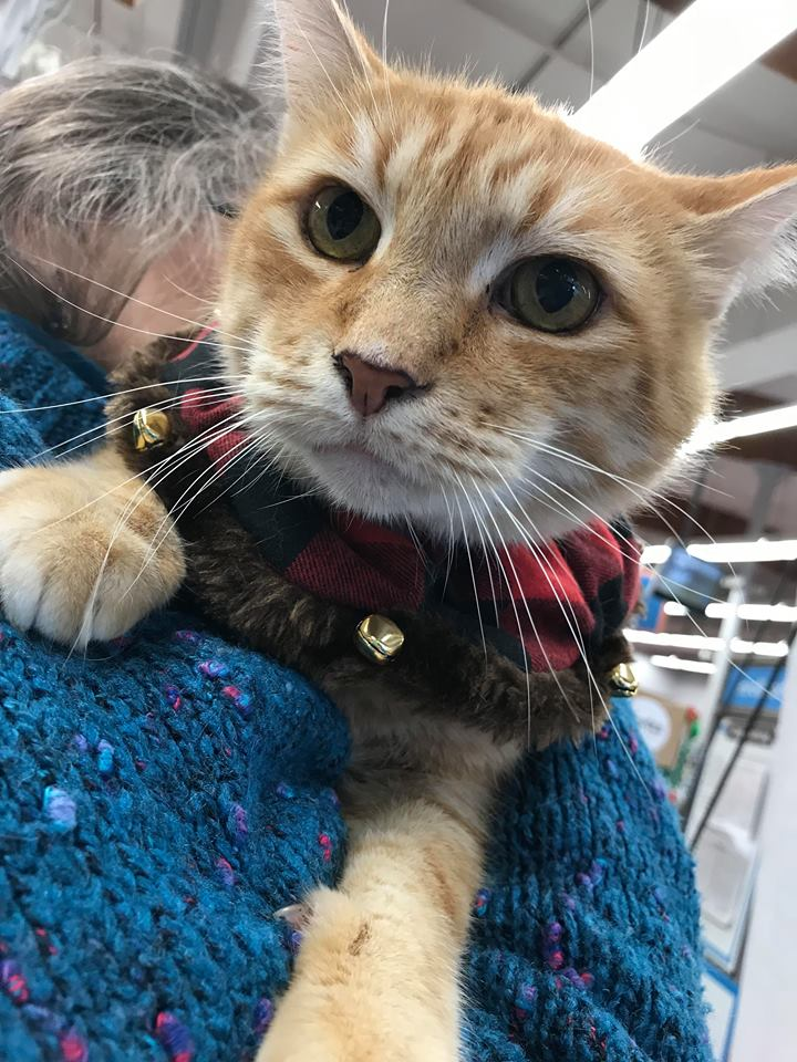 Monty is FIV+ and one handsome boy! He's been waiting for several months for his forever home. It is so sad as he's a VERY ADOPTABLE cat.