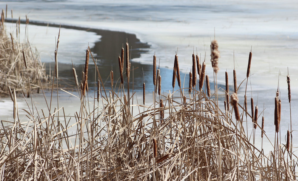 Winter beauty at the Tamarac National Wildlife Refuge. File photo.