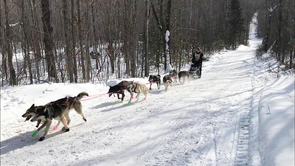 Nicole Grangroth, a Menahga High School junior, competed in the 2019 John Beargrease Sled Dog Junior Race, held last weekend. This was her second year leading an eight-dog sled team. (Submitted photos)