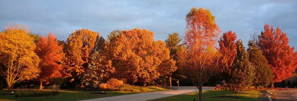 - shade trees