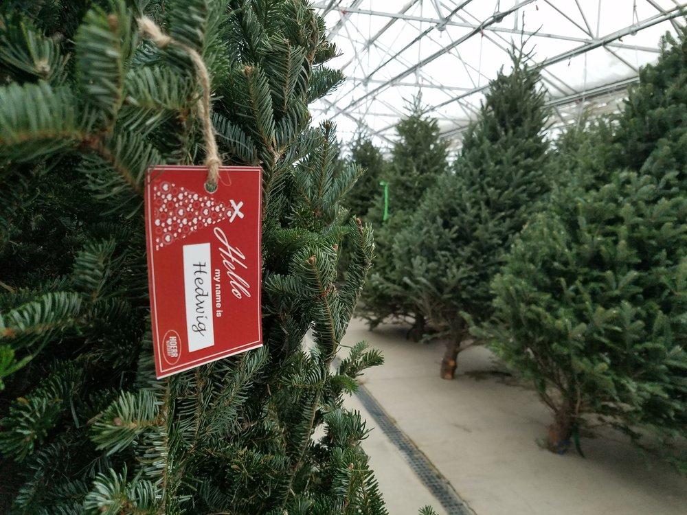 - fresh cut christmas trees