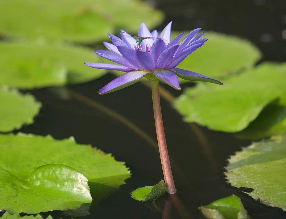 - aquatic plants