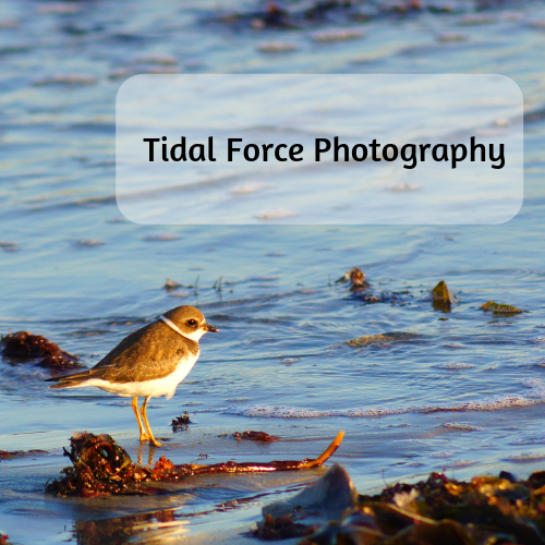 Tidal Force Photography.png