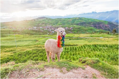 Andeana Travel Diaries: Behind the Scenes of our Andeana Hats Retreat in the Sacred Valley