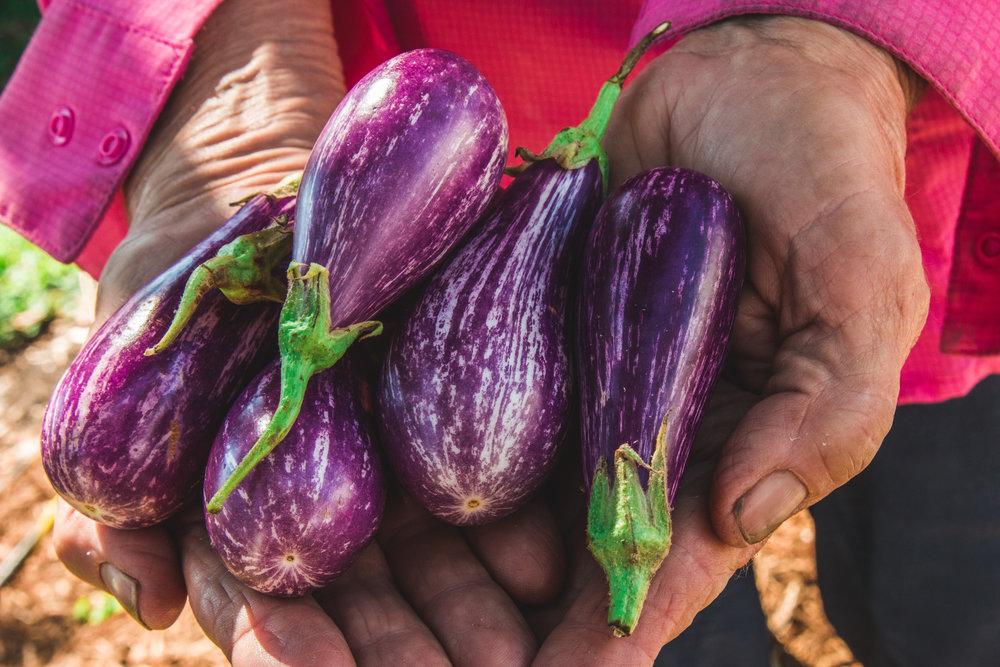 eggplant diane hands (1 of 1).jpg