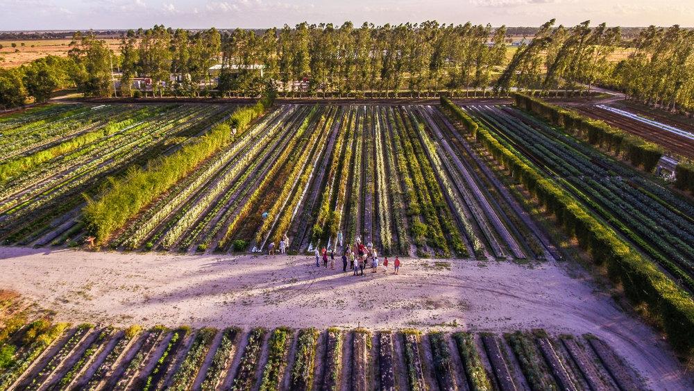 Aerial Farm Tour 1 by Nathan Venzara.jpg