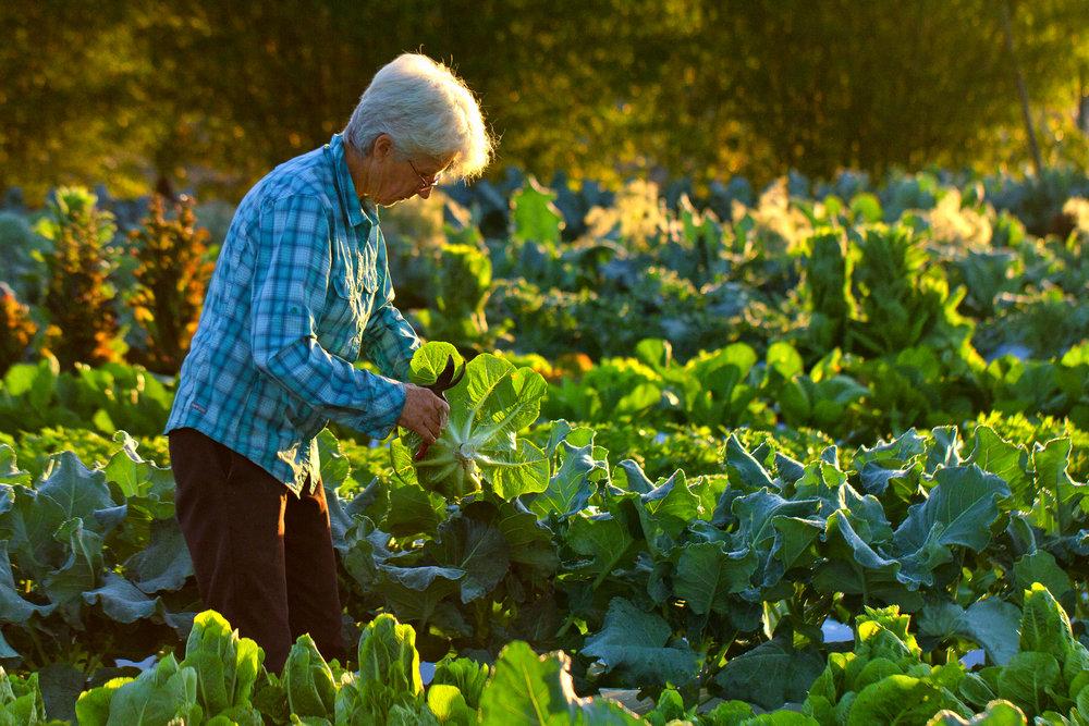 Libby_Volgyes_012_farm_photography_palm_beach_county_kai_kai_farm_working_farm.jpg