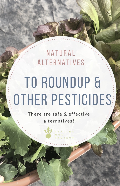 Natural & Safe Alternatives to Roundup / Natural Bug