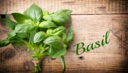 Basil-the-king-of-plants.jpg