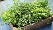 Tips-for-growing-herbs.jpg