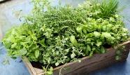 Tips-for-growing-herbs.jpg