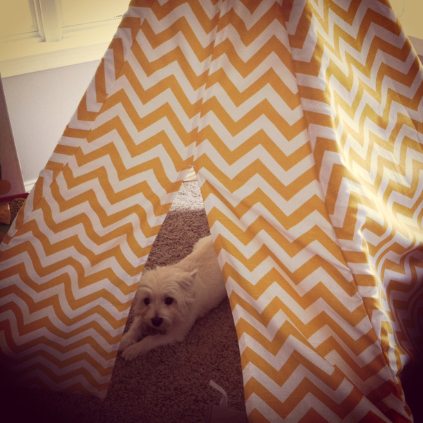 Dog in a teepee @ohbotherblog