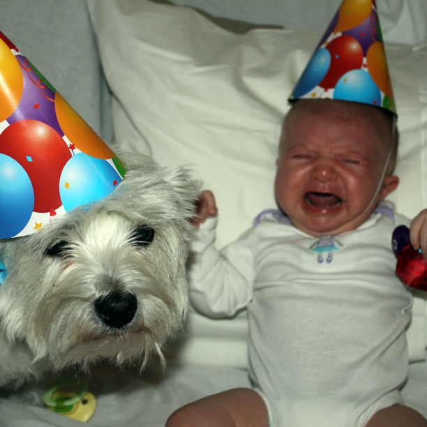 Photo Fail: Dog's birthday party @ohbotherblog