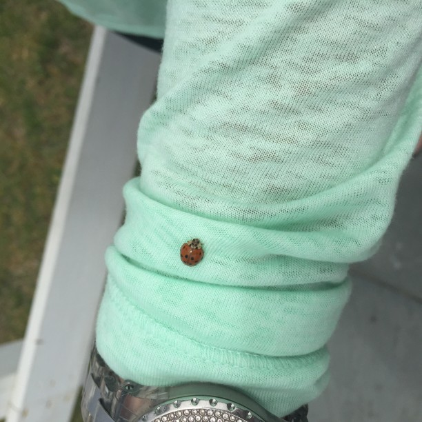 The Ladybugs visit Cape May @ohbotherblog