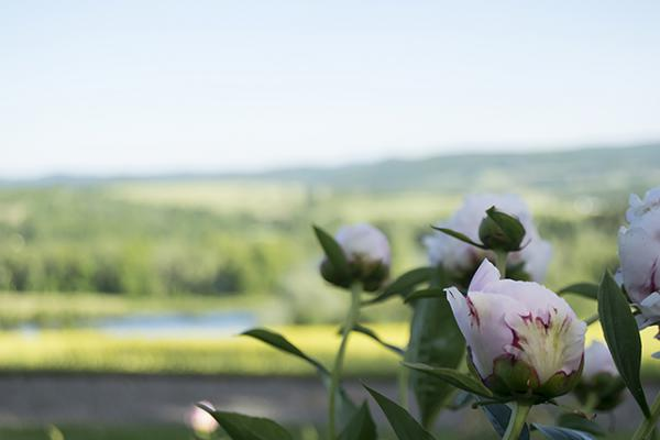 Peone Blossom and View.jpg