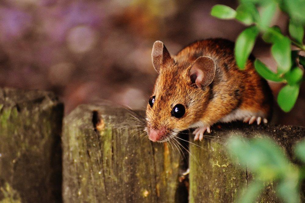 mouse-1708177_1920.jpg