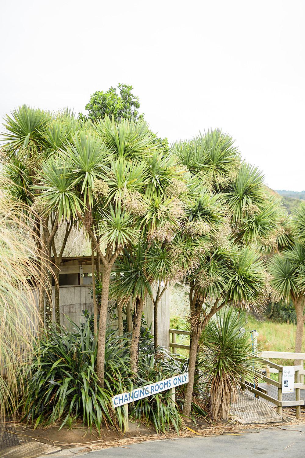 ©bottega53 - New Zealand-engagement-8.jpg