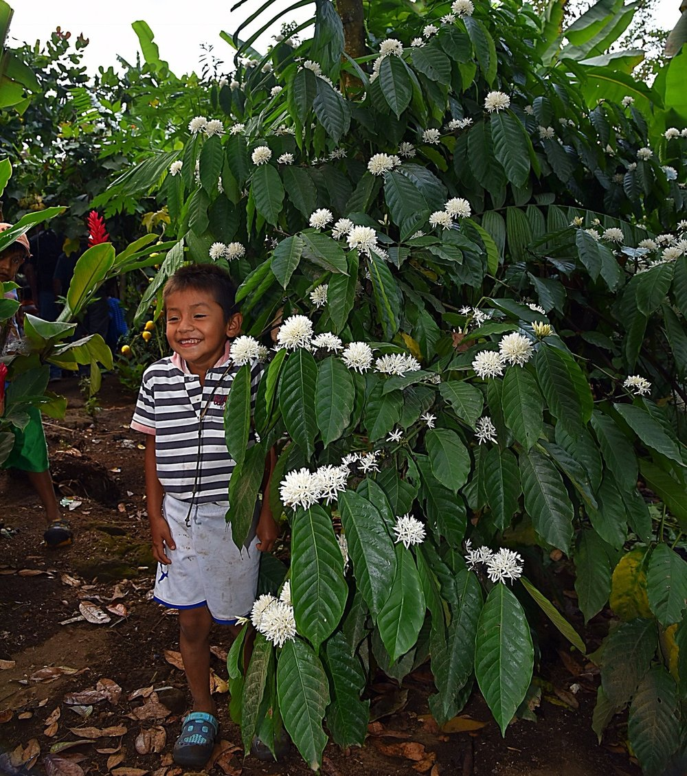 2012 - FLF invests in the Coffee Program to revitalize the community's yearly coffee harvest.