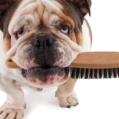 Brushing, dematting or deshedding   Highly recommended for long hair or curly coated dogs  $10 / 15 minutes