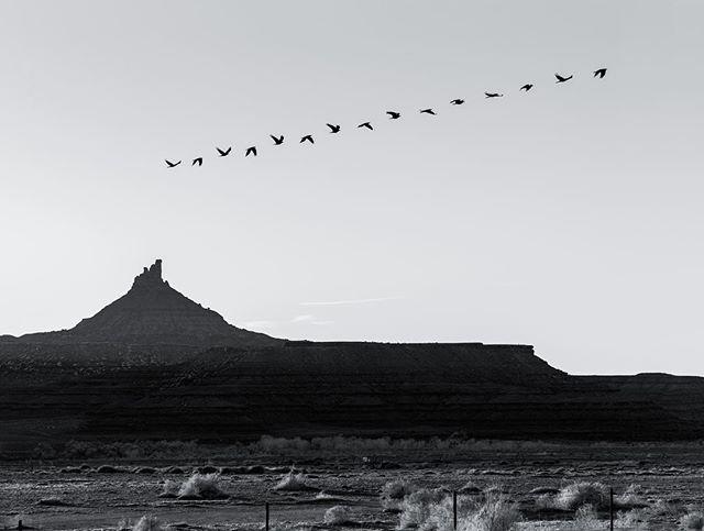 Flight of a raven. 100mm f/9, 15 exposures.
