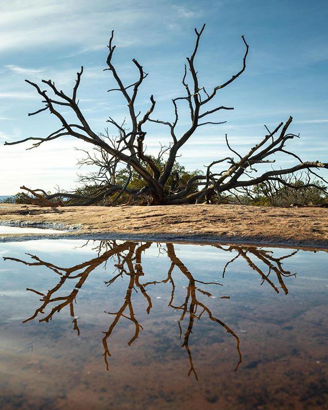 Dead or alive, the Utah Juniper tree is so beautiful.