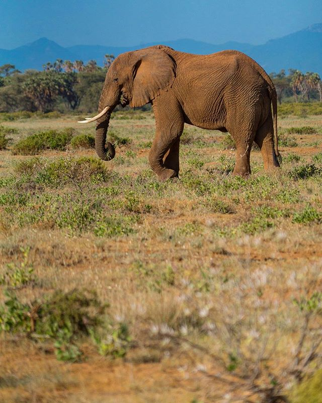 Saw a lot of elephant in Kenya. I wonder if they thought we were really cute driving around with our long lenses and sunburns.