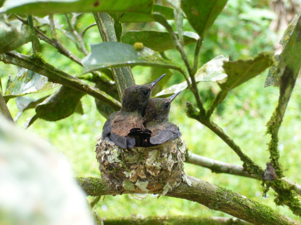 Trinidad May 2006 036.jpg