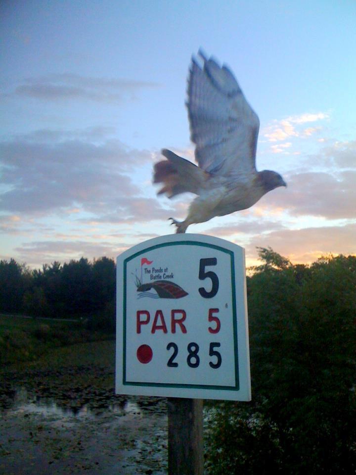 5 bird.jpg