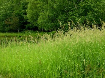 tall-grasses-and-wooded-areas-make-the-perfect-spot-for-ticks-to-converge-1