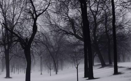winter_trees_201551