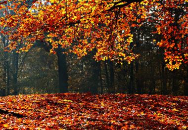 autumn-e1501542403485.jpg
