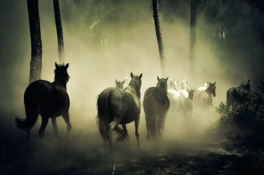 animals-fog-forest-219943 (1).jpg
