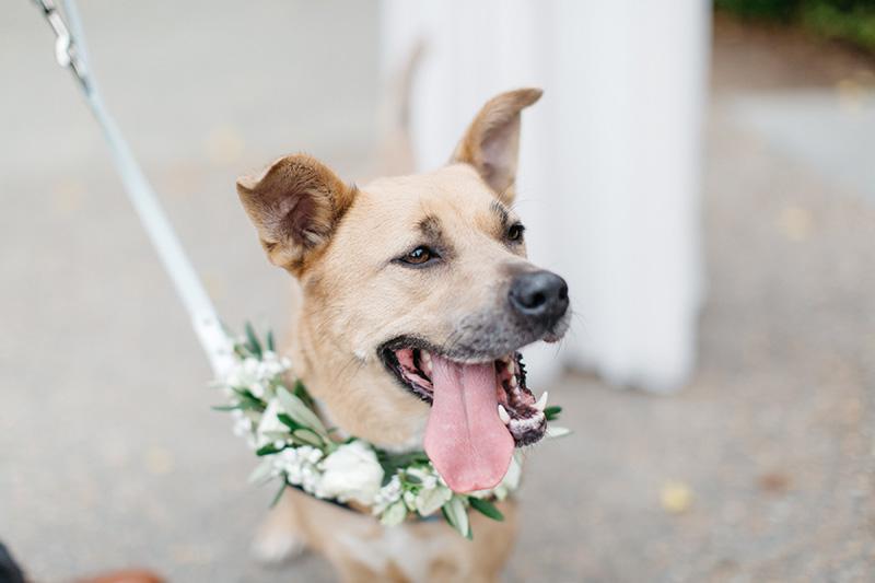 Wedding Dog of Honor Flowers